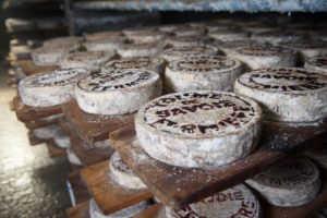 Cheese wheels on planks of wood Haig Park Canberra